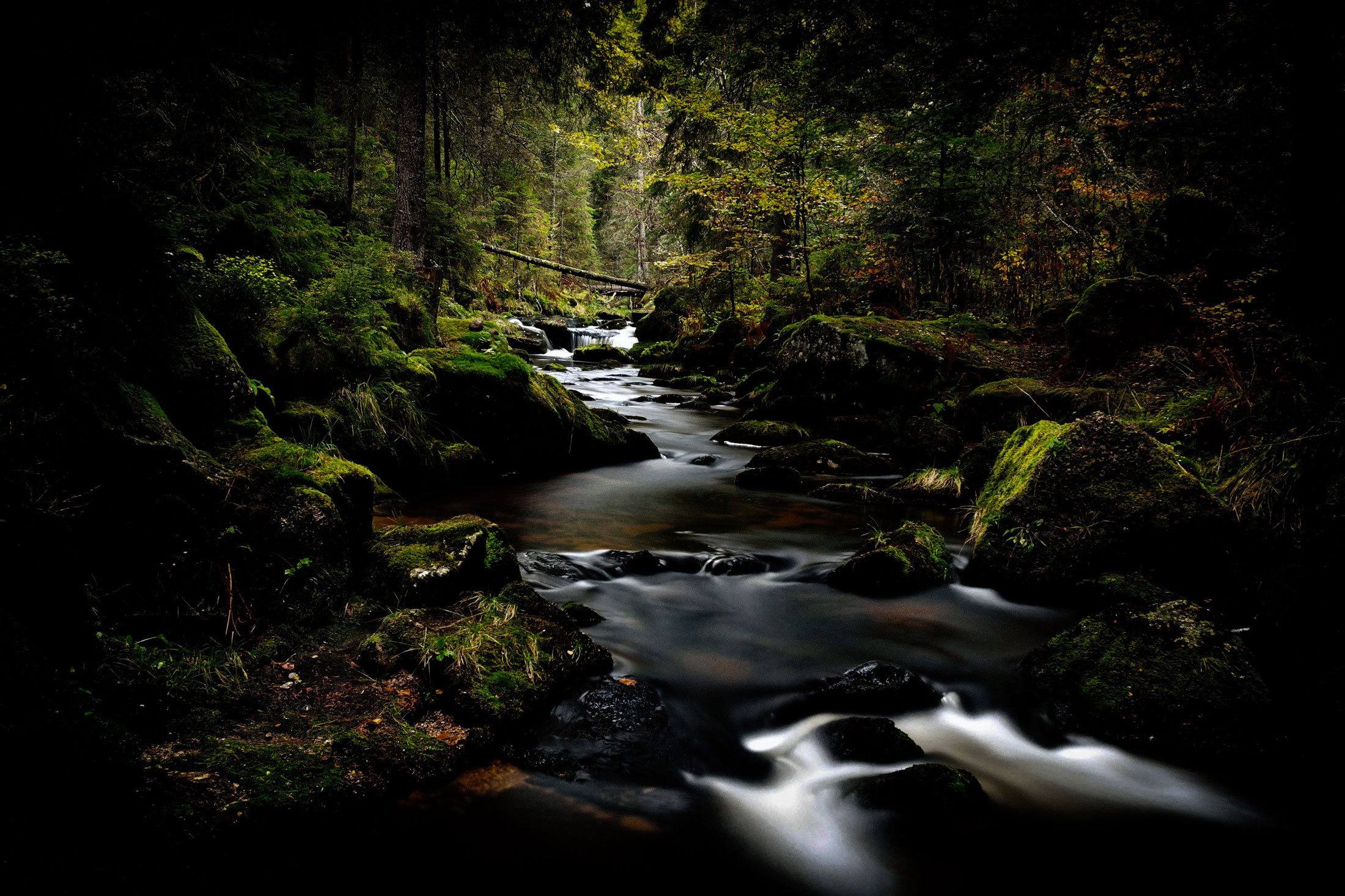 Le Boisé des ruisseaux